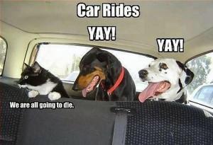 car-humor-automotive-MARS Mobile Auto-jokes